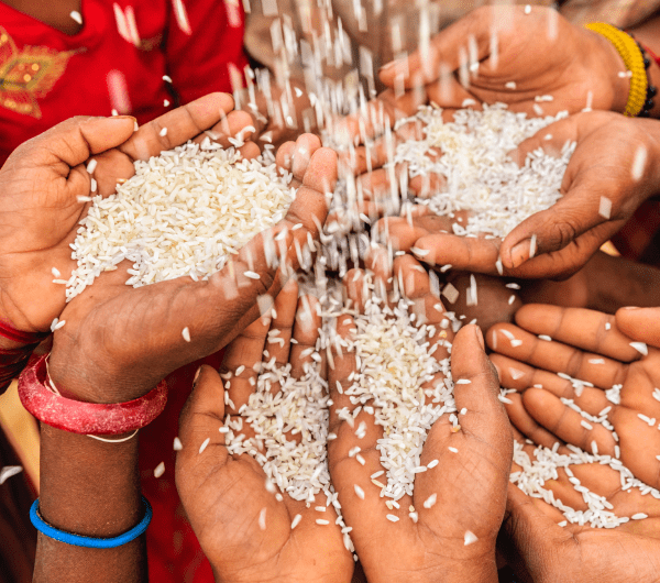 rice pouring into a group of hands