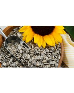Smooth Protein™ - Sunflower Seed Protein 55%